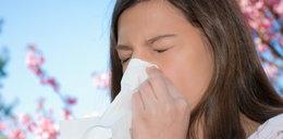 Kalendarz pylenia dla alergików