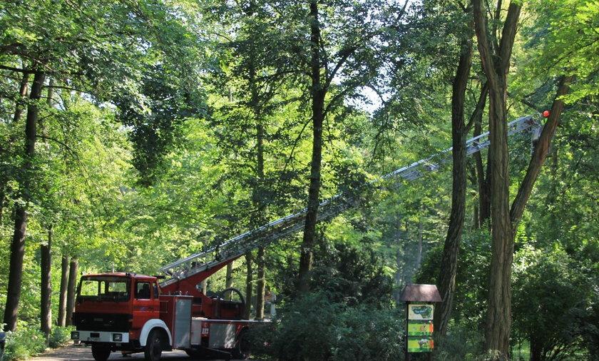 Tak sprzątali zoo zdemolowane przez burzę