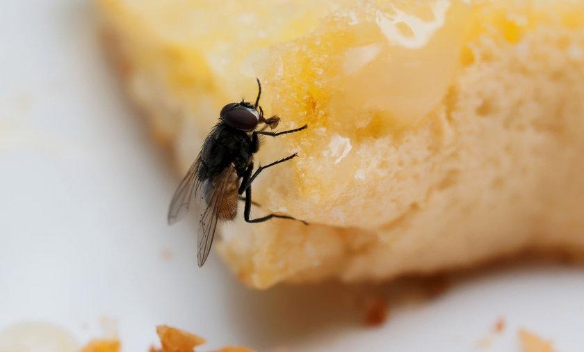 Jakie choroby przenoszą muchy? Po przebadaniu kilkuset latających gagatków naukowcy z Pennsylvania State University doliczyli się aż 351 rodzajów bakterii podróżujących na muchach lub w ich środku.