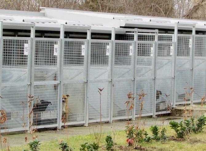 Svi psi u subotičkom Prihvatilišti su čipovani, sterilisani i socijalizovani