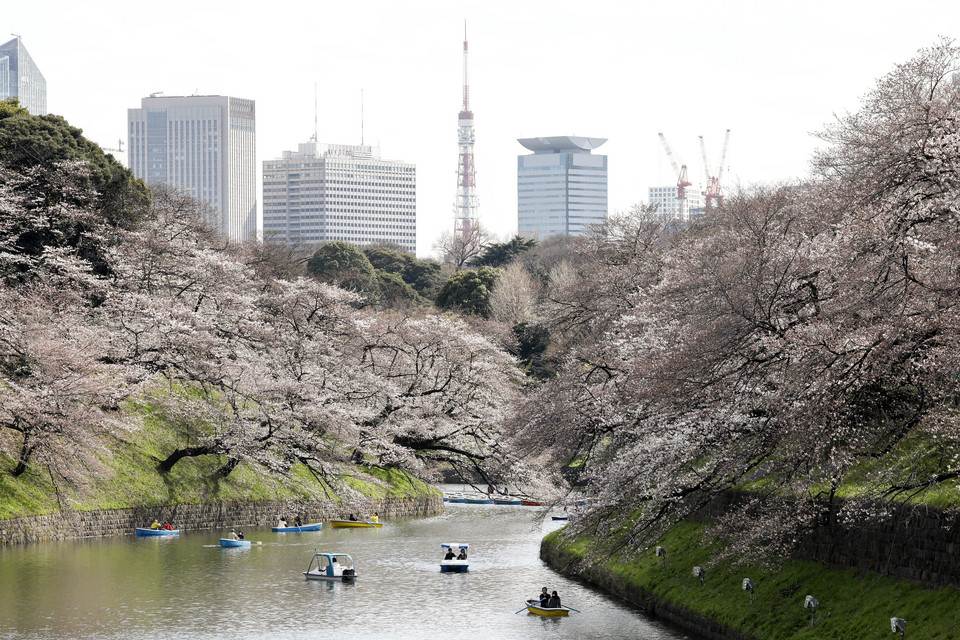 epa06622904 - JAPAN CHERRY BLOSSOMS BLOOM (Cherry blossoms bloom in Tokyo)