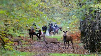 Pregnant woman killed by dogs while walking in French woods