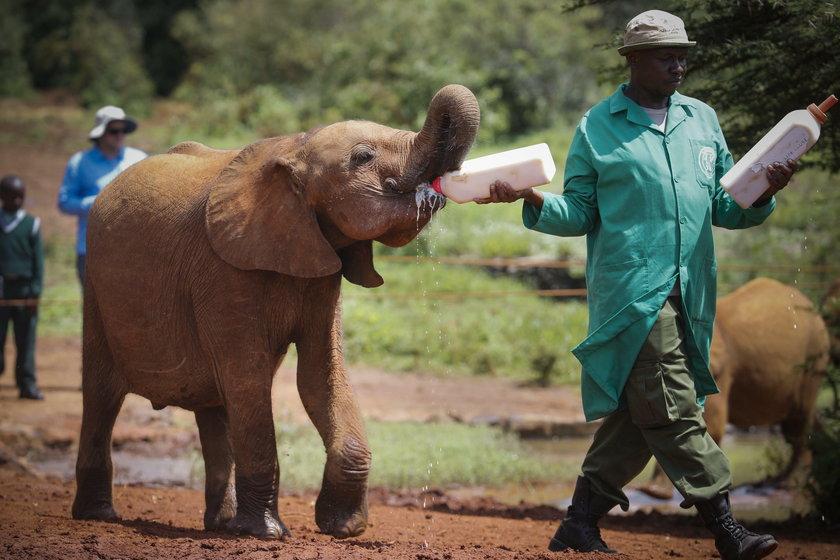 Nairobi's elephant orphanage