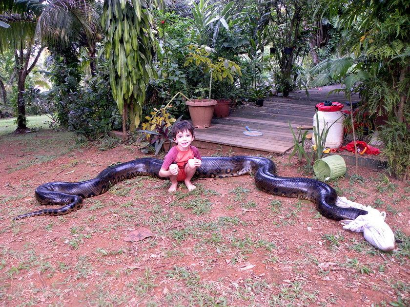 Sebastien Bascoules złapał gigantyczną anakondę