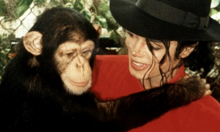 Kiedyś byli nierozłączni. Tak dziś żyje małpa Michaela Jacksona, Bubbles.