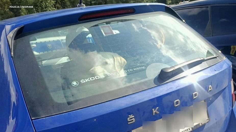 Kobieta zostawiła psa w samochodzie w nasłonecznionym miejscu i poszła na szlak do Morskiego Oka