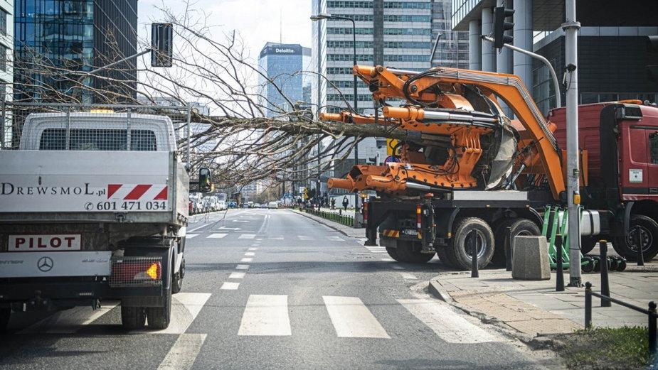 Warszawa: przesadzą, zamiast wycinać. 42 duże drzewa trafią do parku