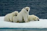 dusan dincic04 polarni medvedi foto privatna arhiva_preview