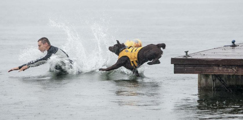 Psy ratownicze prezentowały się na Pogorii