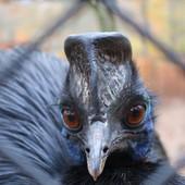 Ptica koja je UBILA SVOG VLASNIKA se našla na prodaji ali samo uz jedan uslov