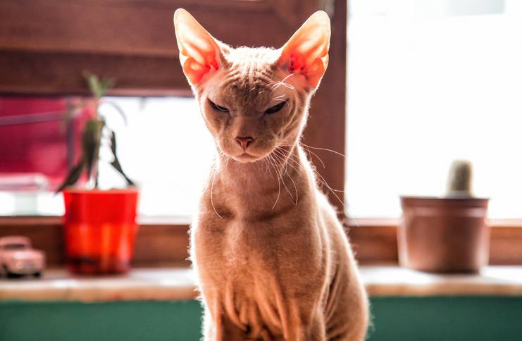 szalony kot randkowy