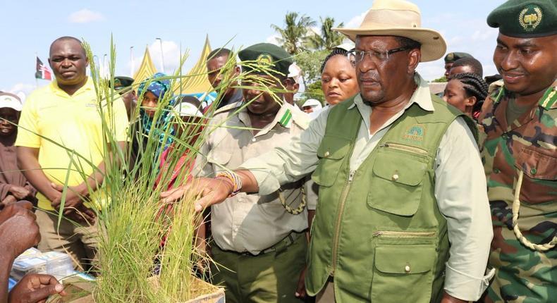 Environment CS Keriako Tobiko during a past tree-planting exercise.