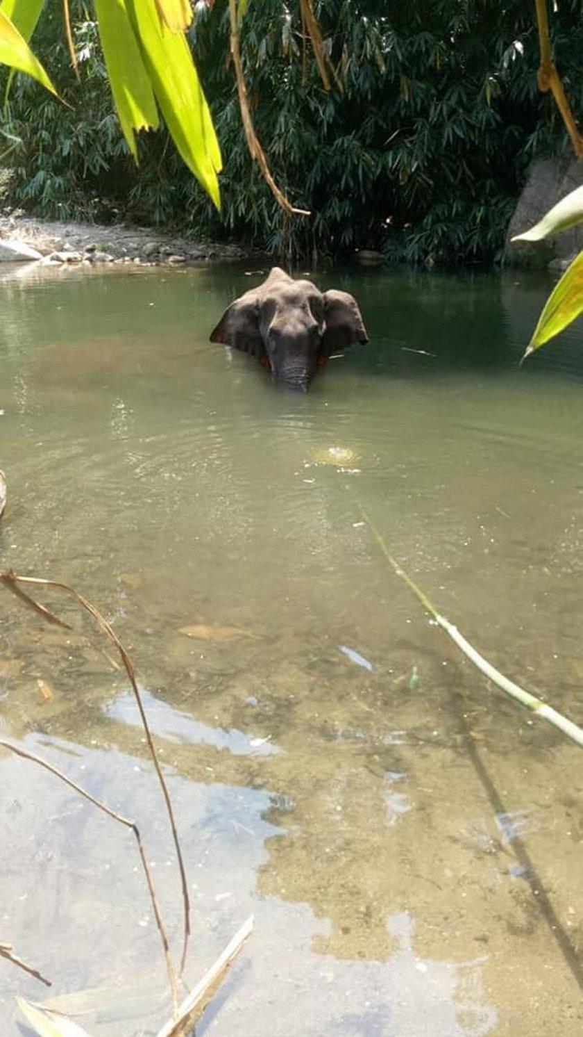 Indie: ciężarna słonica zmarła. W jej pysku wybuchły petardy