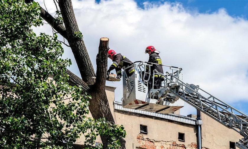 Przechylone drzewo zablokowało skrzyżowanie ulicy Zielonej i Strzelców Kaniowskich