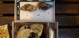 Przemyt mięczaków! Ukrainiec z gigantycznymi ślimakami zatrzymany