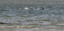 Potwór z Loch Ness istnieje!