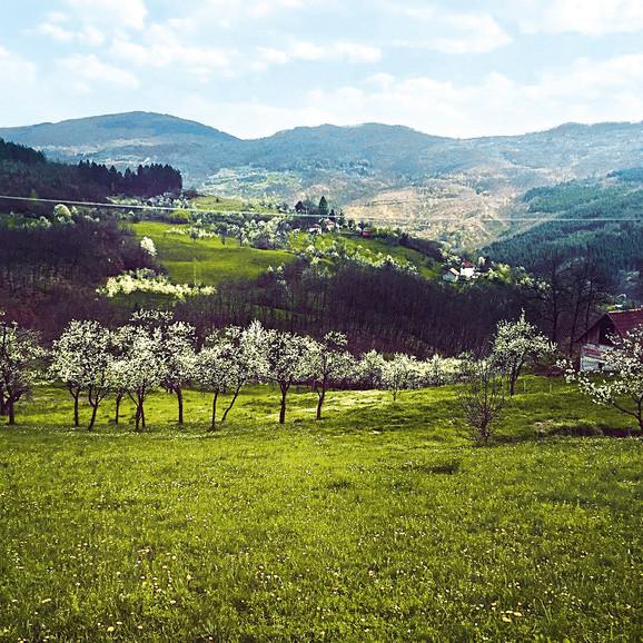 Imaju šest hektara pod raznim vrstama voća
