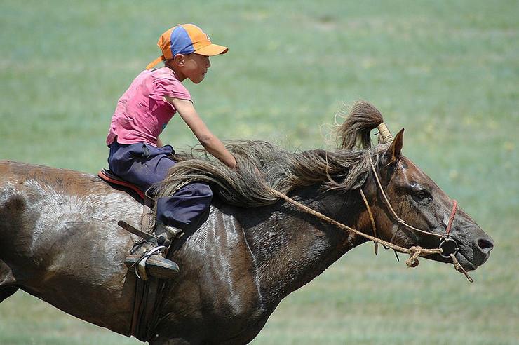 Mongolski konj