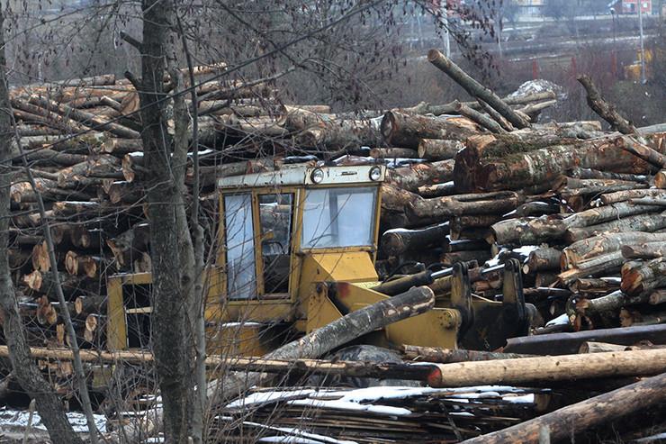 drvopreradjivaci-sume-balvani-foto-S-PASALIC