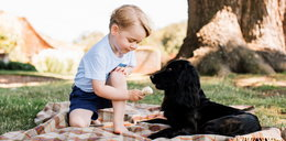 Towarzystwo Opieki nad Zwierzętami atakuje księcia!