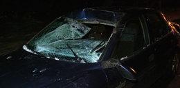 Masakryczny wypadek! Auto zderzyło się z łosiem