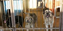 Więcej pieniędzy na bezdomne zwierzęta