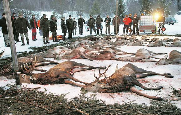 MASAKR: U 2014. godini biće odstreljeno 10 puta više jelena nego prethodnih godina