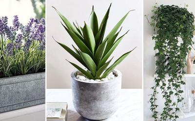 Wstaw Te Rośliny Do Swojej Sypialni A Będziesz Lepiej Się