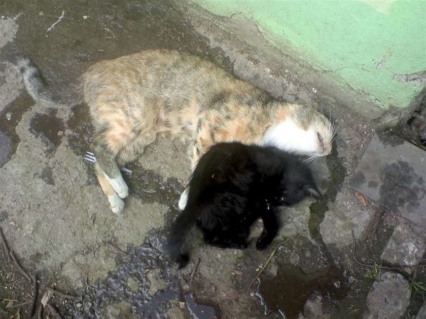 Uwaga! Grasuje morderca kotów!