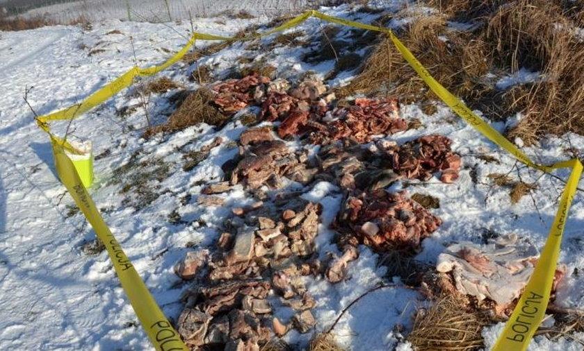 Szokujące odkrycie w Libiążu. Na polu leżało mnóstwo kilogramów mięsa