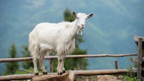 Zwierzęcy jasnowidze - naprawdę potrafią przewidywać przyszłość?