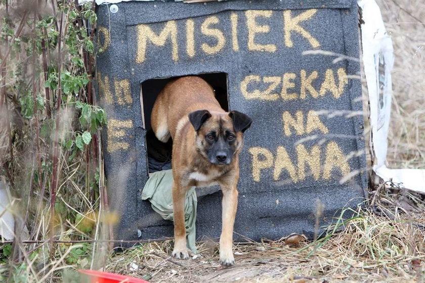 Pies Misiek czeka na pana