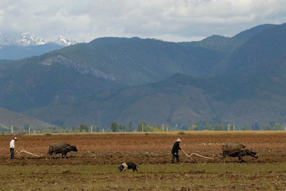 Vu na popularnoj platformi objavljuje kratke snimke sa očeve farme svinja