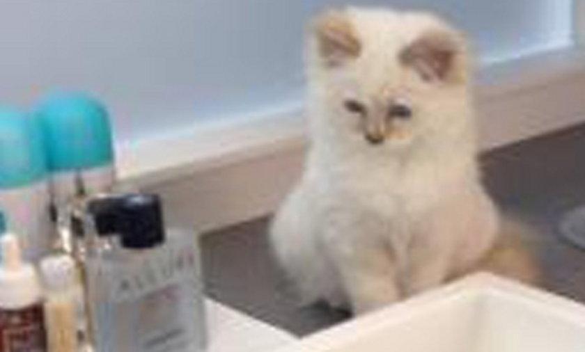 Nowy kot Karla Lagerfelda Choupette ma bardzo wielu zwolennikow na twitterze