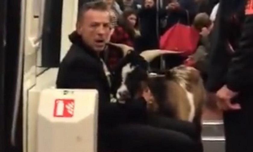 Ukradł kozę, a potem wsiadł z nią do metra. Ten film robi furorę!