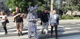 To niezwykła zebra. Pomaga dzieciom przejść przez ulicę