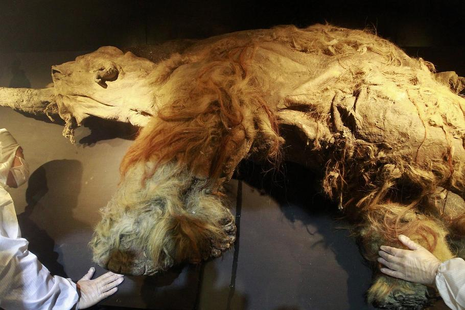 "People examine a frozen woolly mammoth named ""Yuka"" during a media preview at the Chiang Kai-shek Me"