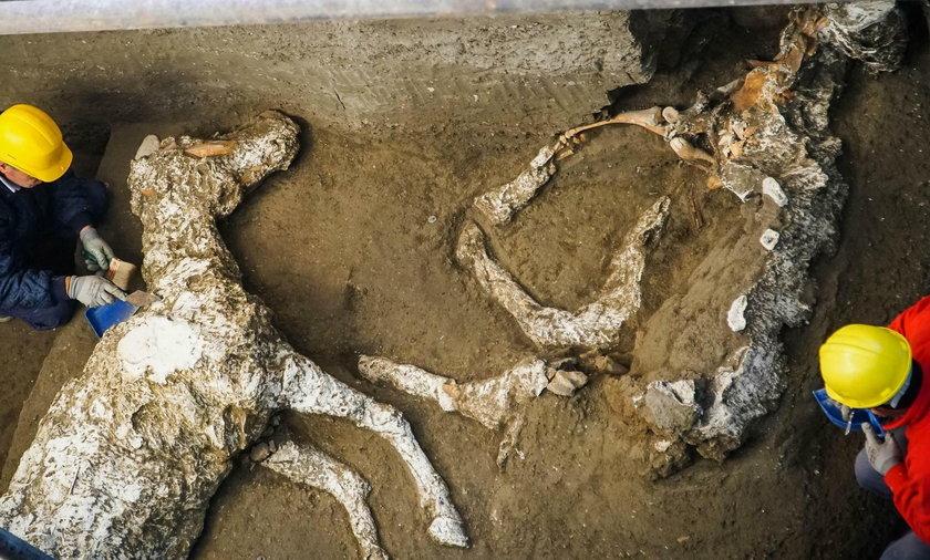 Szczątki koni w Pompejach