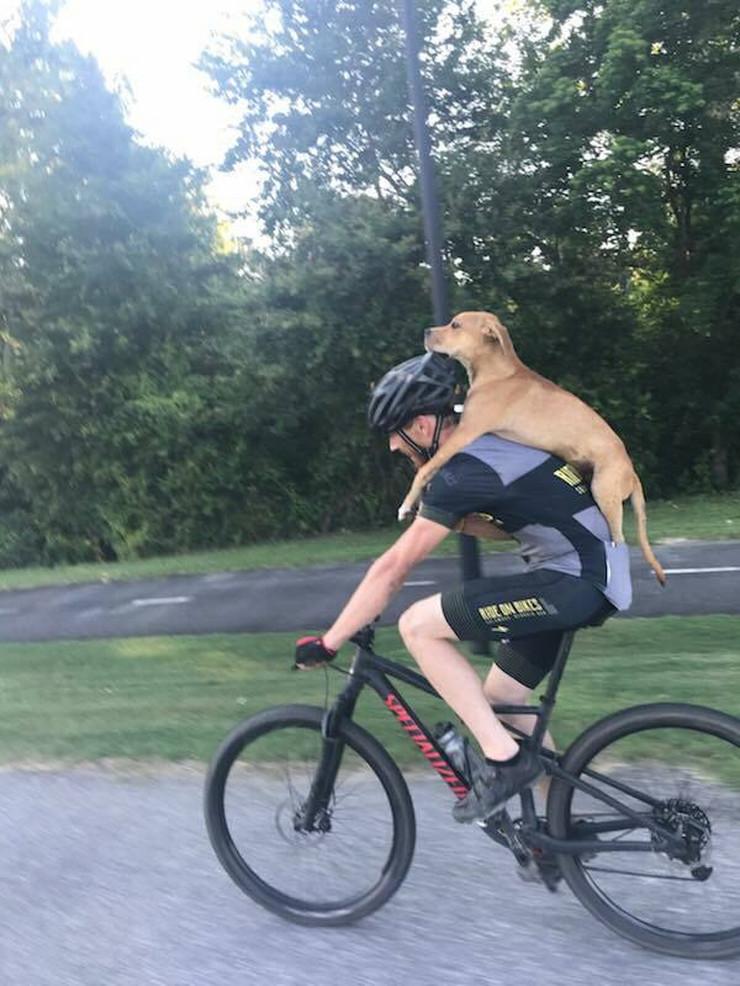 Kolombo čovek pas bicikl Facebook