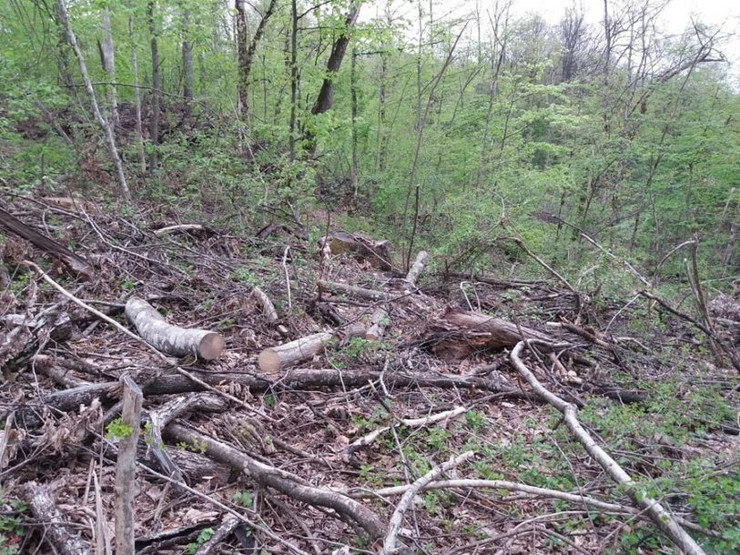 šuma-drva-foto-b-majstorovic-