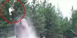 Bizon kopnął 9-latkę w parku narodowym. Dziecko wyleciało w powietrze!