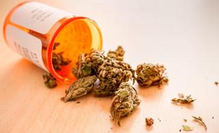 Lecznicza marihuana wreszcie w aptece