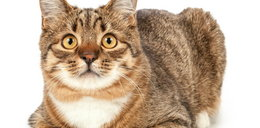 Złe wieści dla właścicieli kotów. Zwierzę z koronawirusem