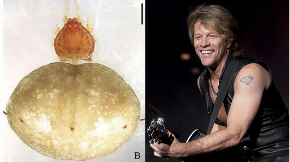 Episinus bonjovi, Jon Bon Jovi