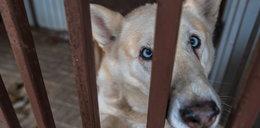 Pies wandal trafił do aresztu