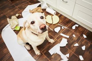Kto odpowiada za szkody wyrządzone przez zwierzęta domowe i hodowlane?