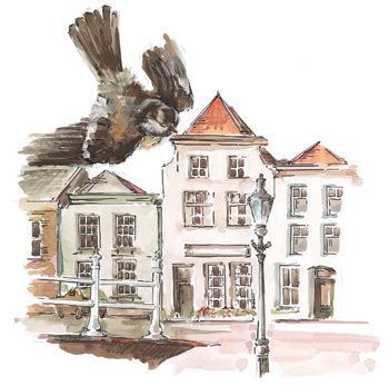 Autorka ilustracji: Joanna Zagner-Kołat