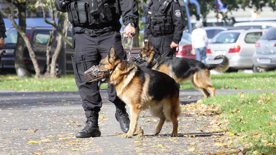 Jak będą żyć psy policyjne na emeryturze? (zdj. ilustracyjne)