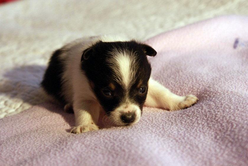 Adoptuj szczeniaki