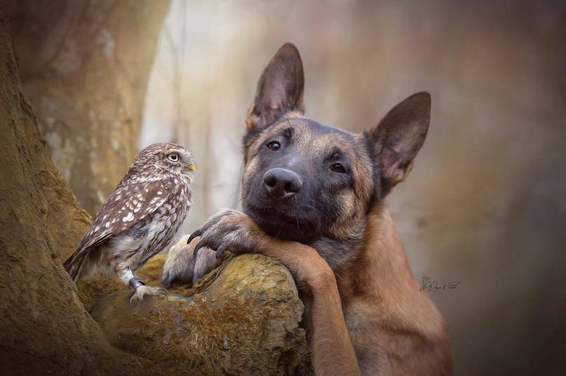 Valószínűtlen barátság